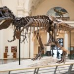 Science Riot at the Field Museum on September 21!